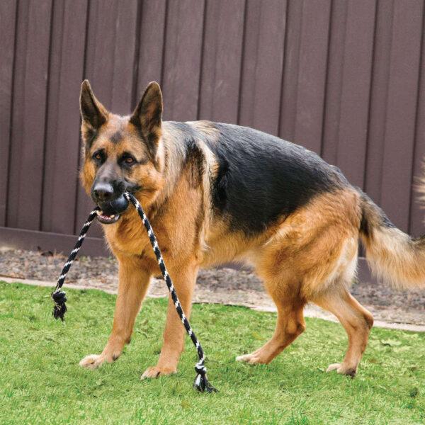 kong extreme ball rope dog